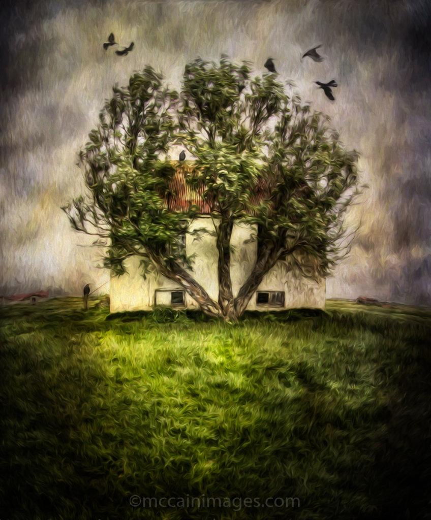 Raven Tree of Kilakot Farm